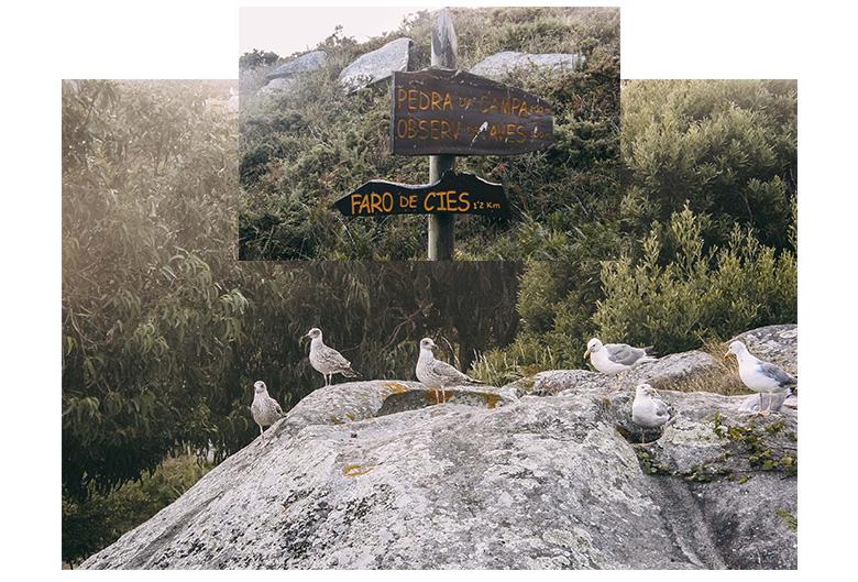 aves que ver en las islas cies